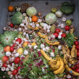 Exploring Food Waste: From Bangalore to Berlin