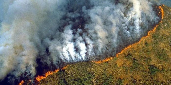 The Amazon is still burning & what you can do about it