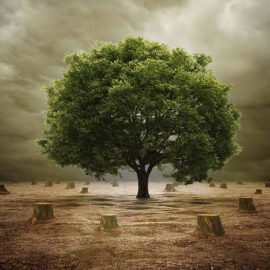 Going Deforestation-free: What's the Role of Corporations?